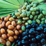 Cüce Palmiye (saw palmetto) bitkisinin Faydaları Nedir?